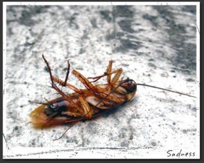 20120723200413-cucaracha1ch.jpg