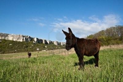 20130429104733-8555693-burro-comiendo-pasto-verde-con-cielo-azul-en-zonas-rurales.jpg