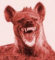 20120201202704-hiena-riendo-riendose.jpg