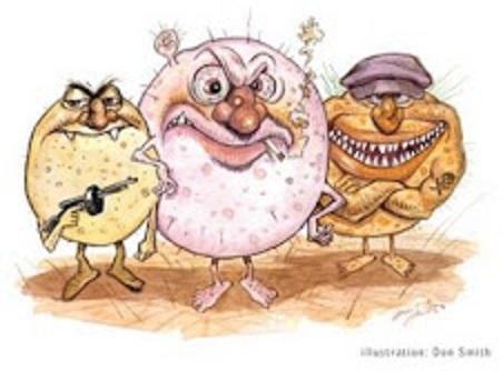 20120820102924-virus-bacteria-caricatura.jpg